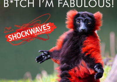 Viral Meme Marketing - Wella Shockwaves